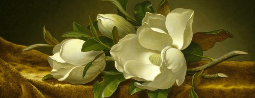 2-magnolias-on-gold-velvet-cloth-martin-johnson-heade
