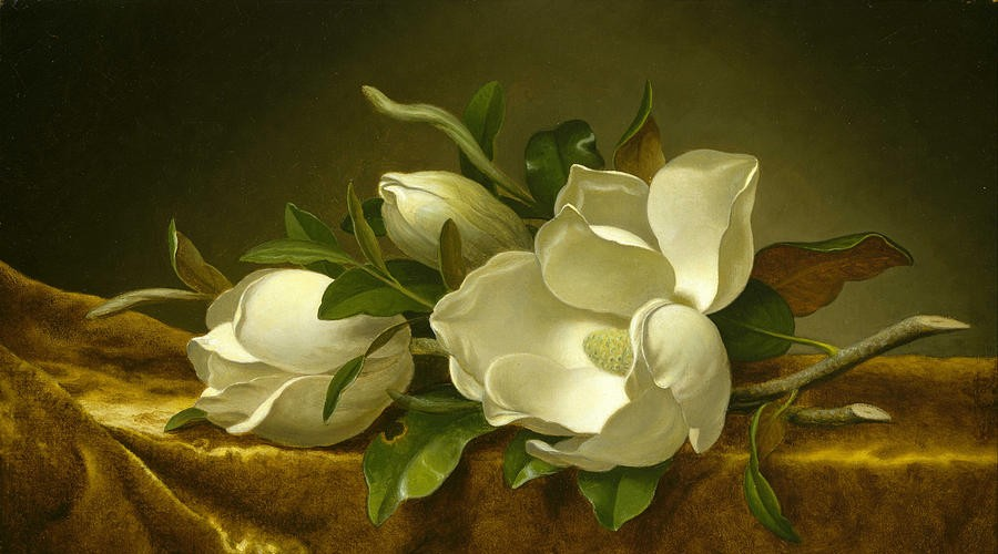2-magnolias-on-gold-velvet-cloth-martin-johnson-heade